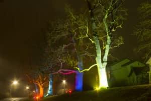 Lichterstadt Bäume
